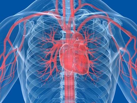 nabelschnurblut-medizin-herzinfarkt